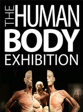 Ambassador Theater The Human Body Exhibition